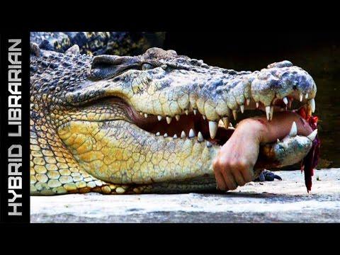 Image of: Netflix Youtube Worlds Most Dangerous Animals Youtube