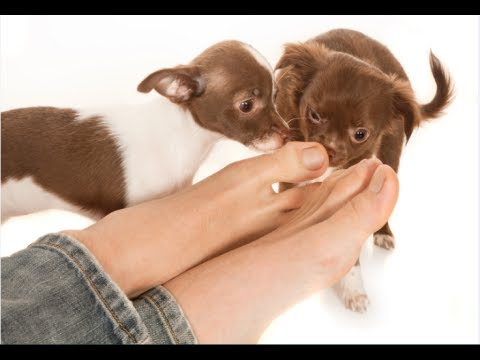 How Do You Get Rid Of Dogs Smelly Feet