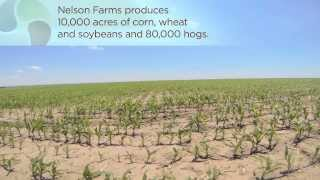 From the Field: Nelson Farms, Kansas