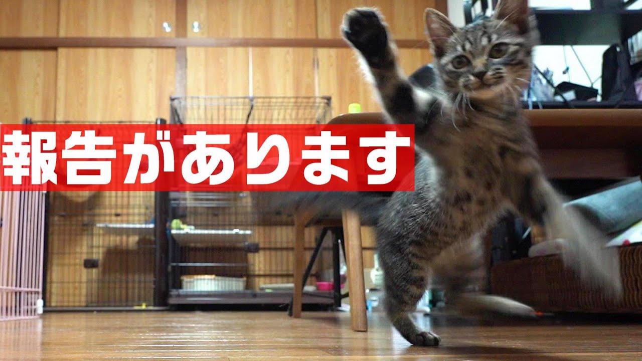 子猫とポンさんのことで報告があります