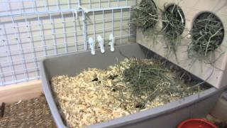 How To Litter Box Train Your Bunny Rabbit!