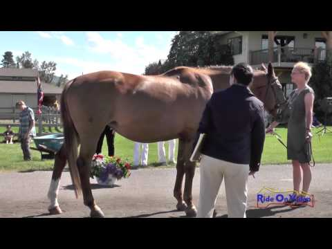 211J1 Ione George On G Salsa T3D FEI Jog 1 The Event At Rebecca Farm July 2014