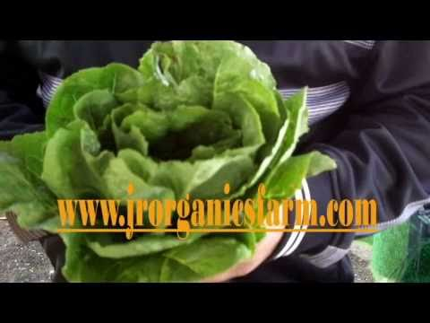Fresh and Tasty Episode 1, A EAT Good Food San Diego Video