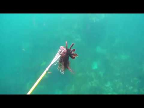 Chasse sous marine Martinique 4 Deeper Blue