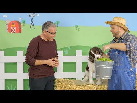 merrick-grain-free-dog-food-|-chewy