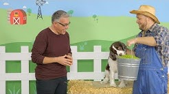 Merrick Grain-Free Dog Food | Chewy