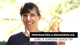 Propagating A Bougainvillea | Carl's Garden Quick Tip