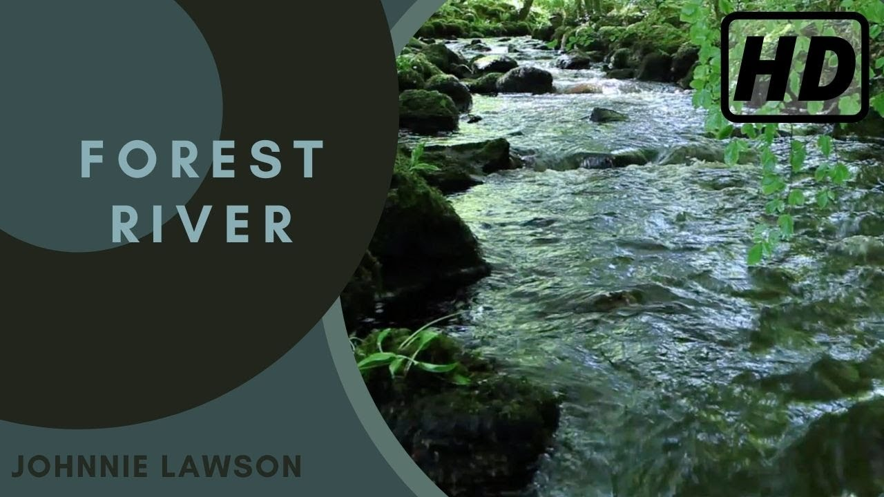 Nature Sounds of a Forest for Relaxing-Natural Soothing ...