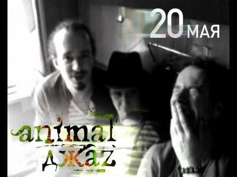 Смотреть онлайн Animal ДжаZ - Хабаровск 2011 (Nebo Records)