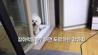 SUB) 잡아 먹을까? 하면 도망가는 강아지