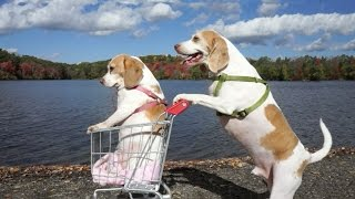 Dogs\' Epic Shopping Cart Voyage: Funny Dogs Maymo & Penny
