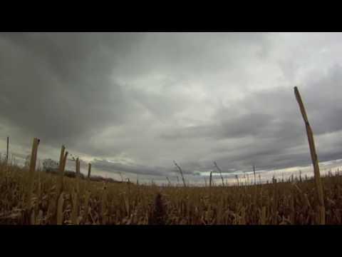 Pheasant Hunting - Ipswich South Dakota 2013