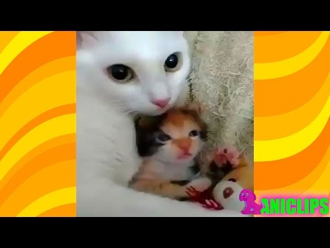 The Amazing Cat Hugging Kitten Video Compilation !!