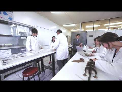 Carreras que ofrece la Universidad del Azuay