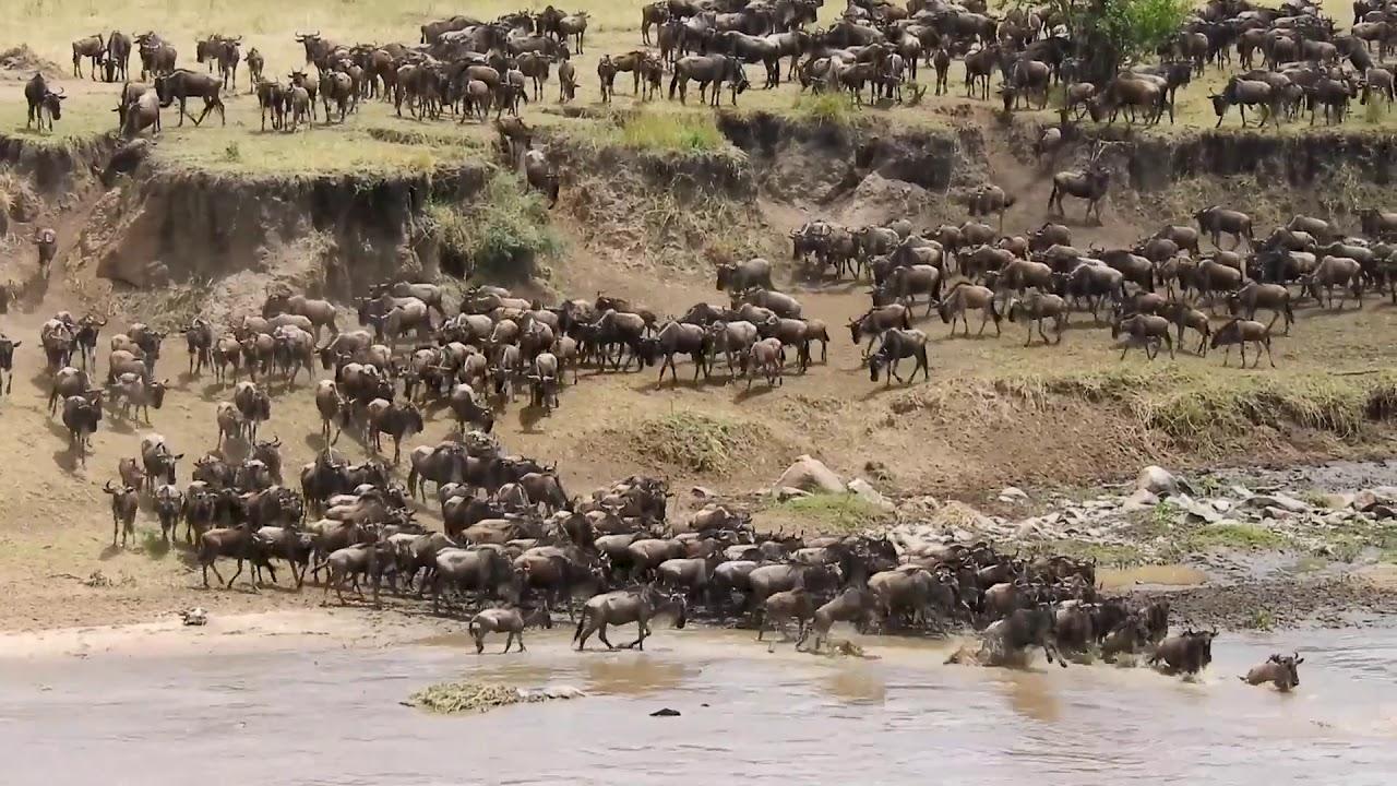 13 Top Best Tanzania Safari Tours 2021