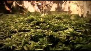 Вьетнамские преступные группировки