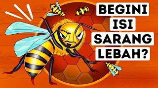 Inilah yang Bisa Kamu Lihat kalau Masuk ke Sarang Lebah