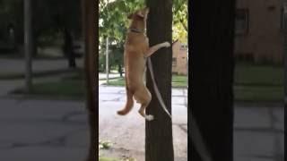 お散歩の途中ではしゃいじゃった。木登りに張り切る犬の元気っぷり