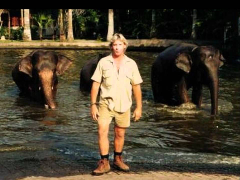 Steve Irwin said, My mission ... is to save wildlife. He did.