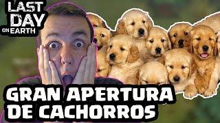 GRAN APERTURA DE CACHORROS | LAST DAY ON EARTH: SURVIVAL | [El Chicha]