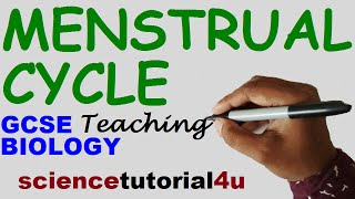Menstrual Cycle (Basic & 4 stages), GCSE SCIENCE BIOLOGY