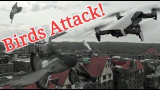HOW BIRDS ATTACKED MY  DJI MAVIC AIR DRONE & DISRUPTED GPS