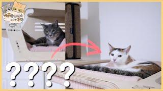 고양이가 고양이 집에 놀러갔습니다