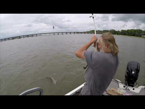 Flounder, Whiting, Sharks! Fall Fishing Beaufort SC