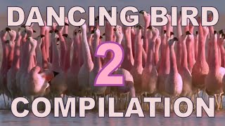 Dancing Birds Compilation (Part 2)