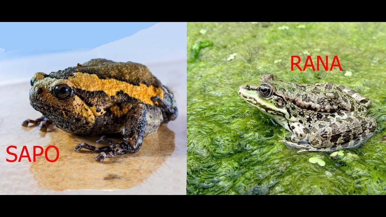 Diferencias Entre Sapos Y Ranas
