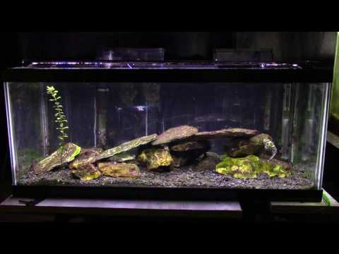 Some Basic Information About A Brackish Aquarium