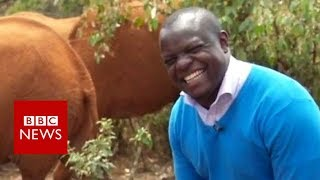 Elephant interrupts BBC reporter in mid-flow - BBC News