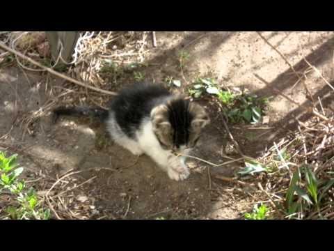 pby catalina black cat