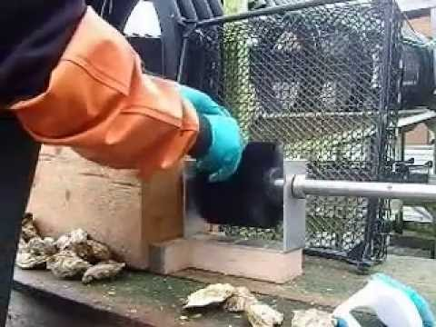 Oyster cleaning brush