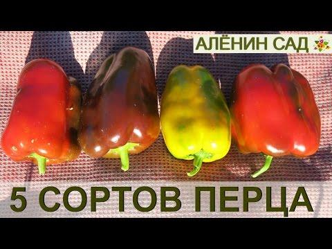Перец сладкий - семена, описание сортов, цены, купить в