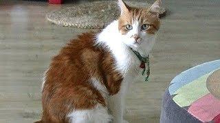 笑!飼い主を脅かすあーにゃん!猫は誰とお喋りしていた? thumbnail