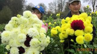 hmong farming flower