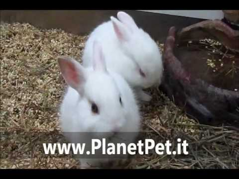 Coniglio Nano – www.PlanetPet.it