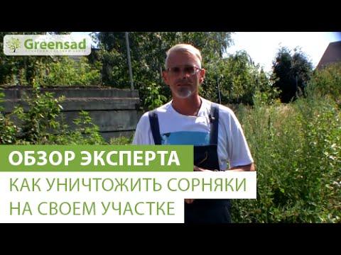 Трава стевия: сахарозаменитель, вред или польза, отзывы и фото