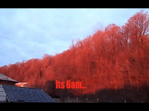 Strange Phenomenon - Entire Forest Turns *RED* in Ontario as residents look in AWE!
