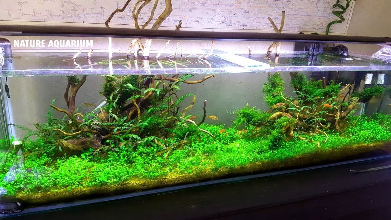 Nature Aquarium How To Make And Maintain