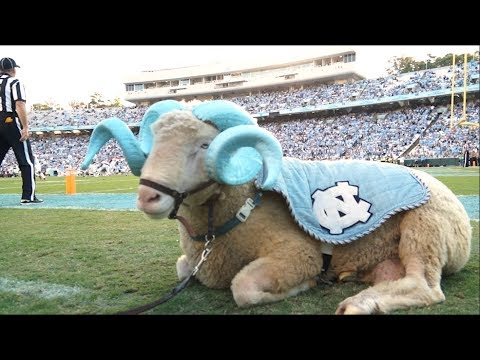 A Day In The Life | Rameses, The Carolina Mascot
