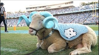 A Day in the Life   Rameses, the Carolina Mascot