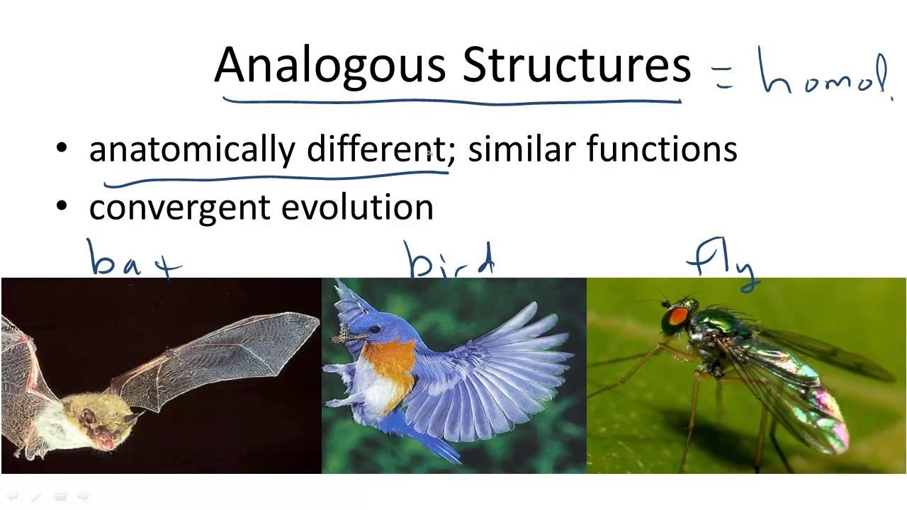 analogous structures youtube