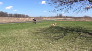Training A Dog To Stay In Its Owners Vicinity Suburban K9 Dog Training (chicago)