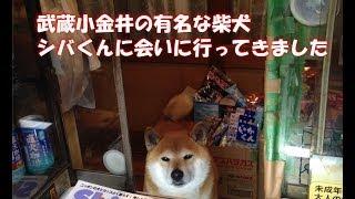海外でも話題の「鈴木タバコ店」の看板犬・シバ君に会いに行く
