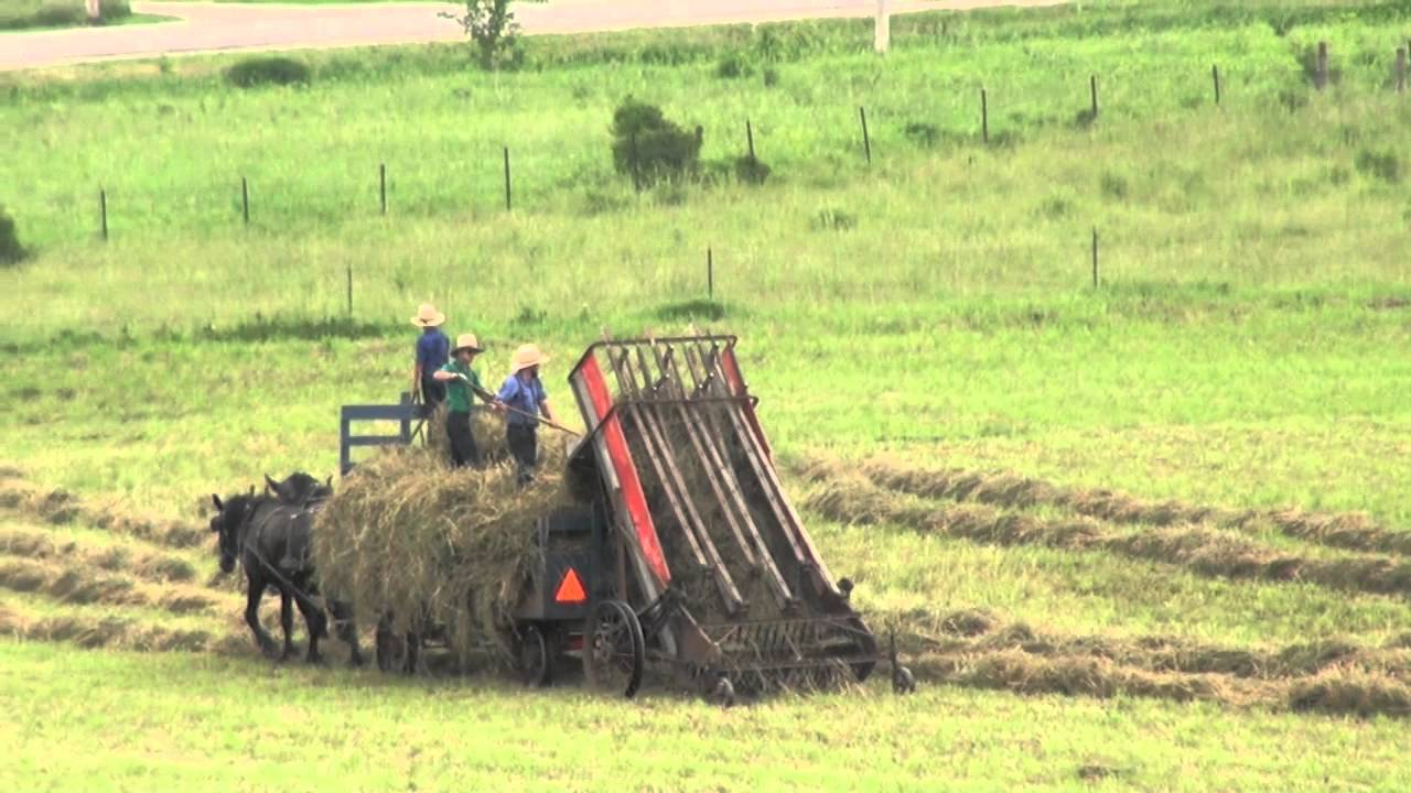 Industrial History: Harvest: Hay: Putting loose hay in a mow