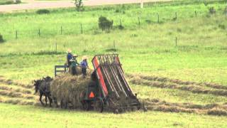 The Amish Way of Making Hay