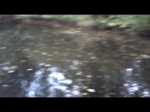 Big Folly Pool Safari park outlet under bypass Safari park