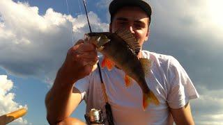 Mикроджиг на Xарибо конфеты /  Perch fishing on Haribo sweets